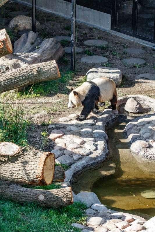 Pandahuset, BIG